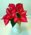 """Prýštec /Euphorbia/ """"Vianočná ruža"""""""